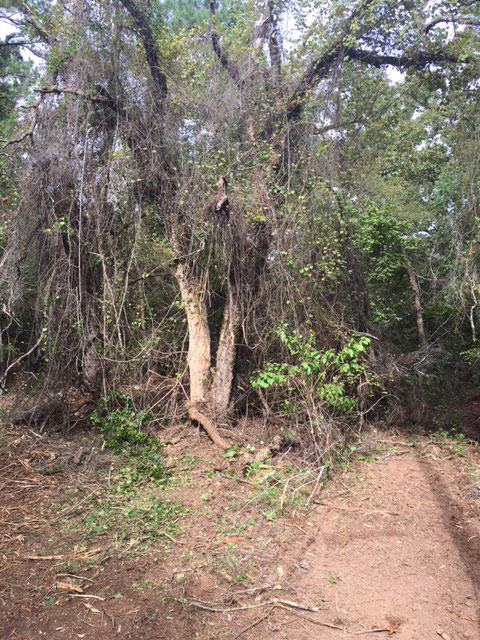 Underbrush clearing