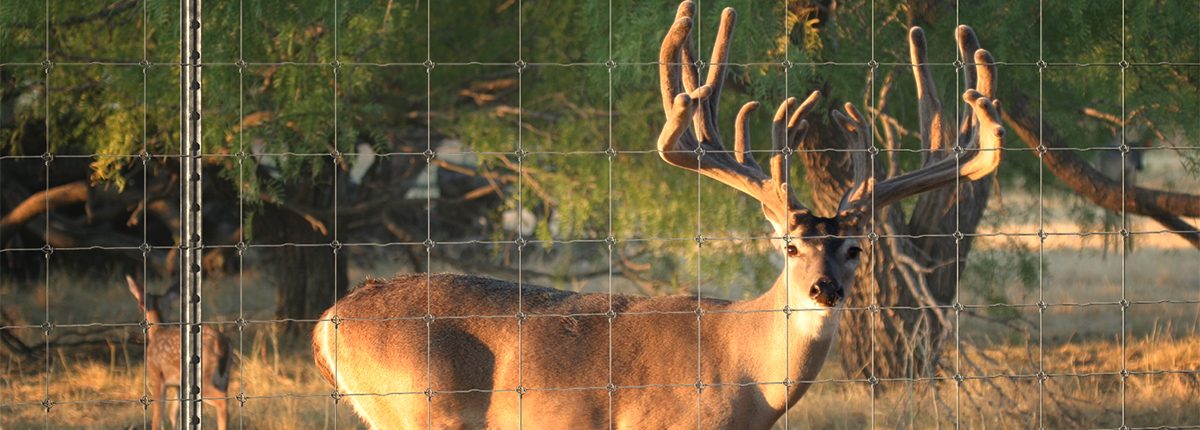 High Deer Fence Land Clearing Tejas Ranch Amp Game Fence