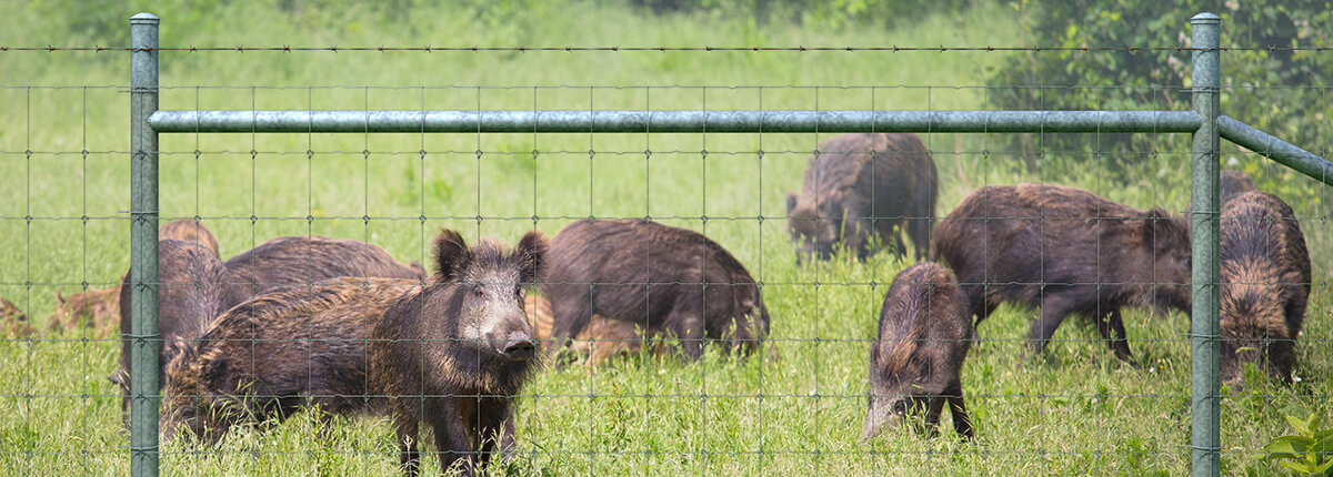 Hog-proof fence