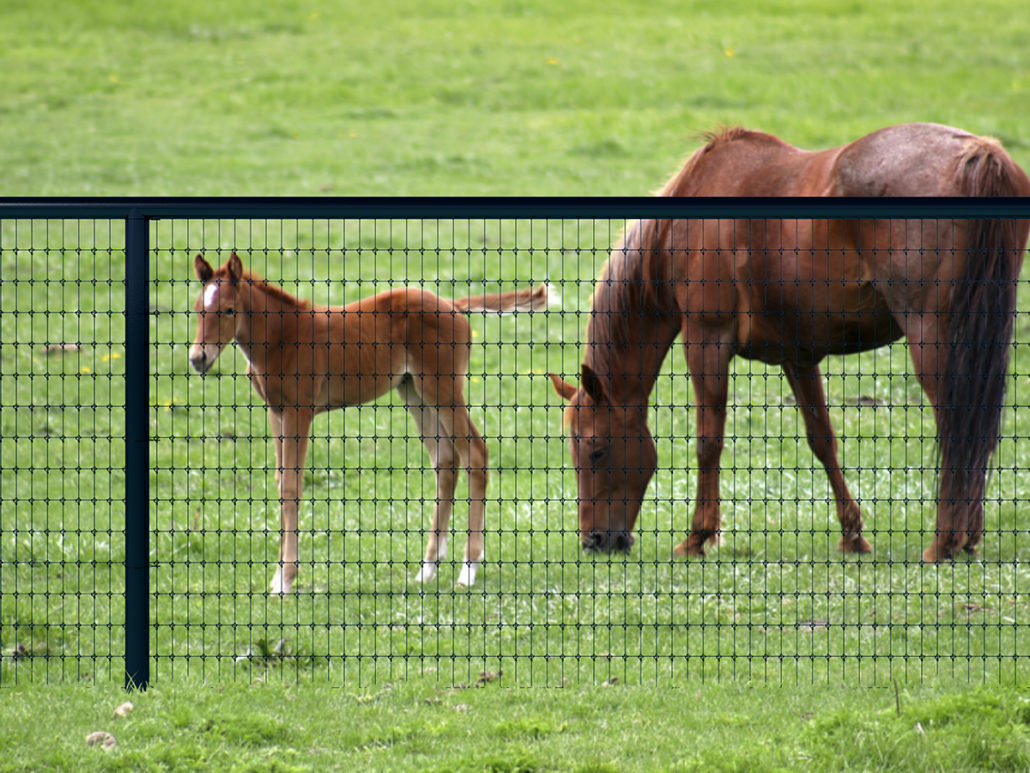 High Tensile Mesh Horse Fence Keep Horses Safe And Secure