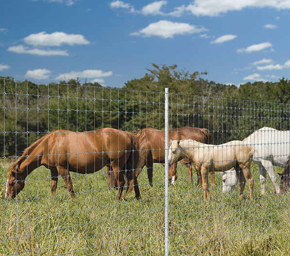 Ranch Fence Solutions